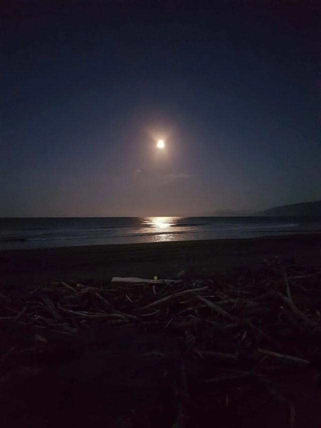 Nouvelle-Zélande, le Cap Foulwind et sa côte sauvage 🌿 23