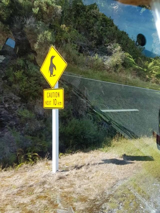 Nouvelle-Zélande, les incontournables Pancake Rocks ! 🤩 5