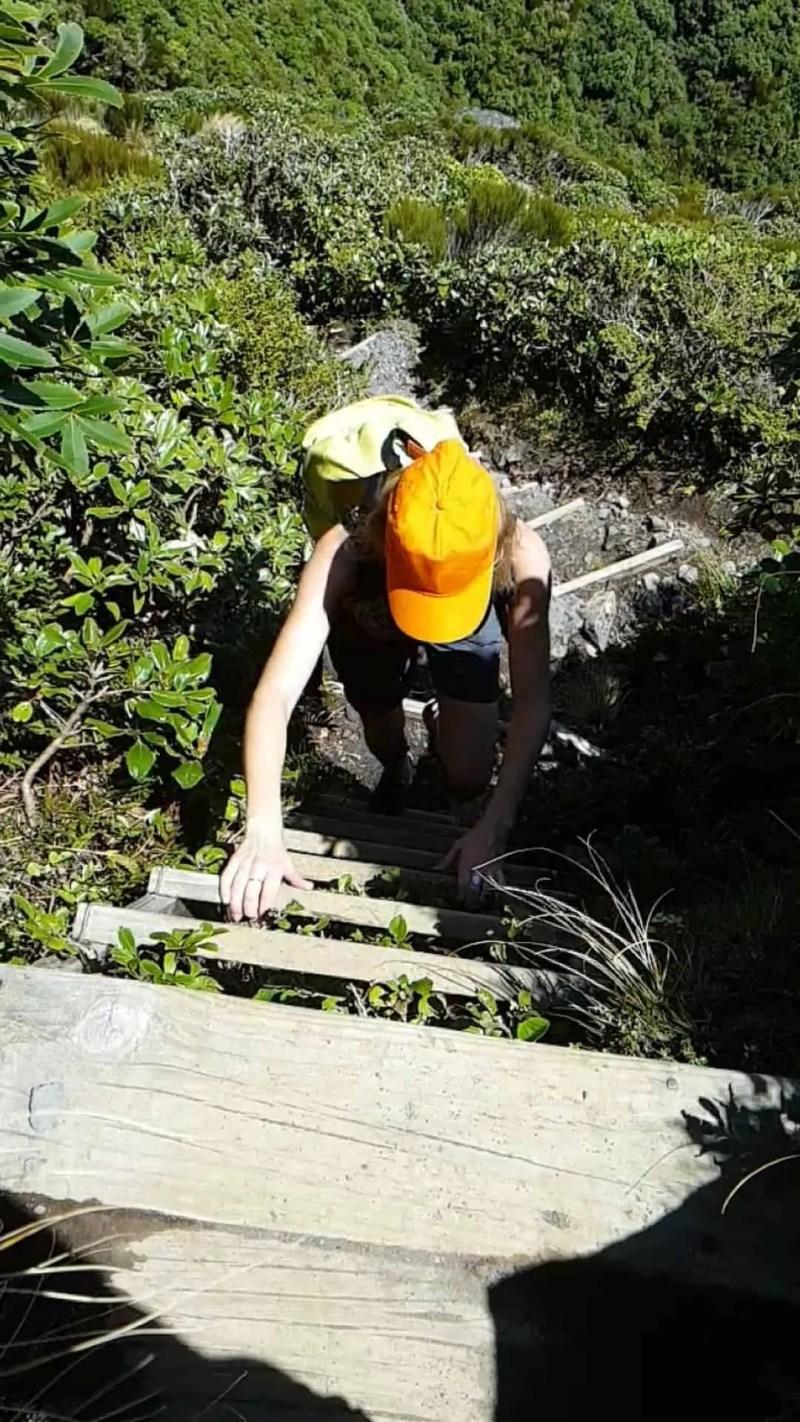 Nouvelle-Zélande, rando Holly Hut Track avec vue sur le Mont Taranaki ❤ 6