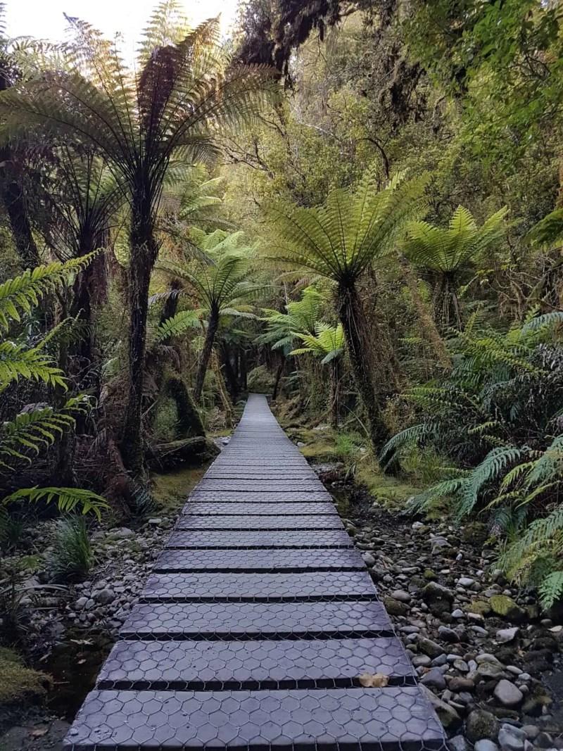 Nouvelle-Zélande, un levé de soleil féerique sur le lac Matheson ☀️ 15