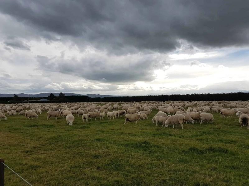 Nouvelle-Zélande, un tour en hélico au dessus de Queenstown qui nous en met plein les yeux ! 🚁 29