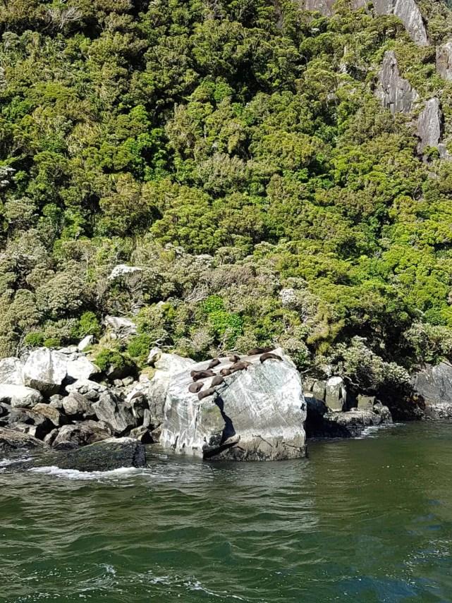 Nouvelle-Zélande, magnifique tour en bateau au coeur du Milford Sound ⛴ 24