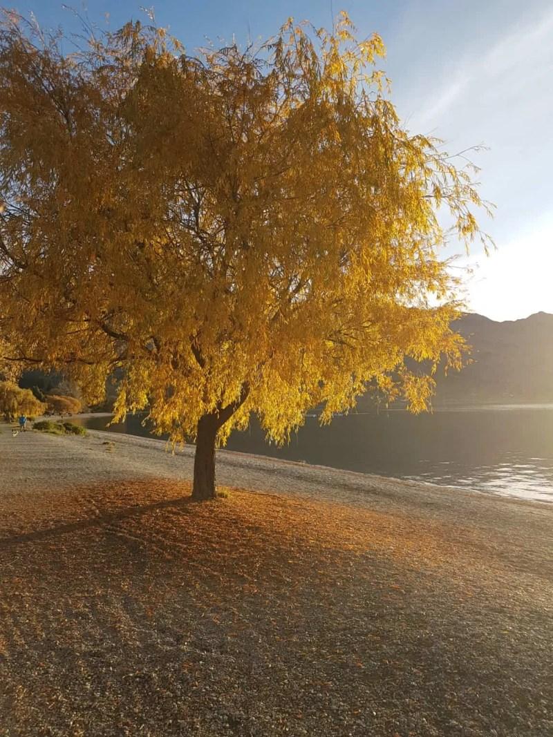 Nouvelle-Zélande, derniers instants de notre trip en NZ 🖐 4