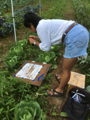 Farmer Eva nabs a photo of a fresh illustration from right in the field.