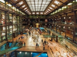 La salle de la grande galerie de l'évolution