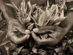 Salgado-africa-mains-thé