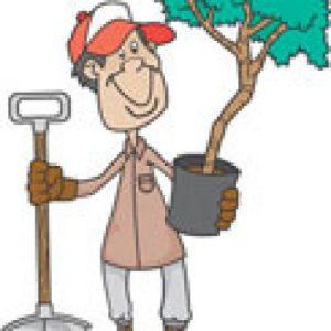 Des conseils pour le jardin en février