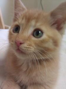 Meet Noah, Kitten on the Keyboard