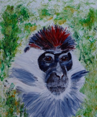 Cherry crowned mangabey portrait 35 x 25