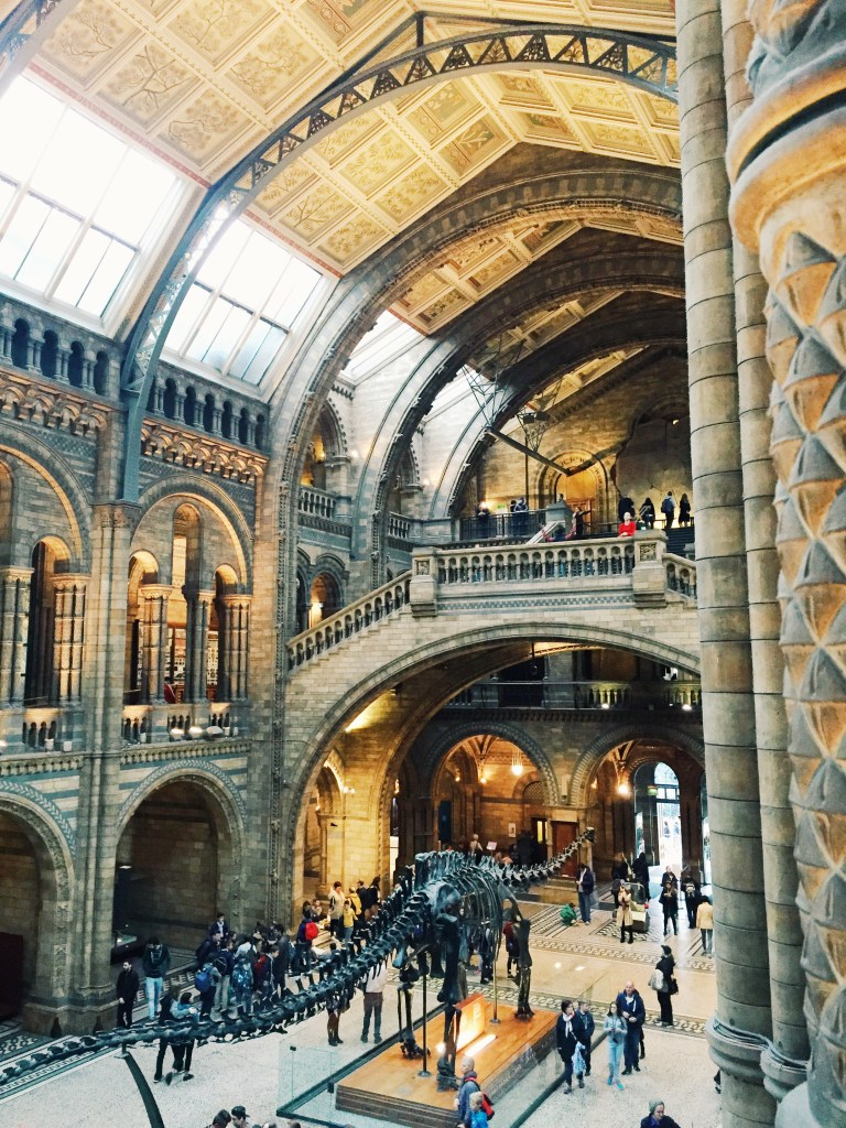 More Natural History Museum