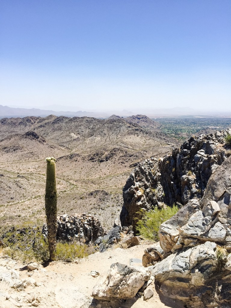 Cactus high atop Squaw Peak, Phoenix Arizona. get out | stretch out