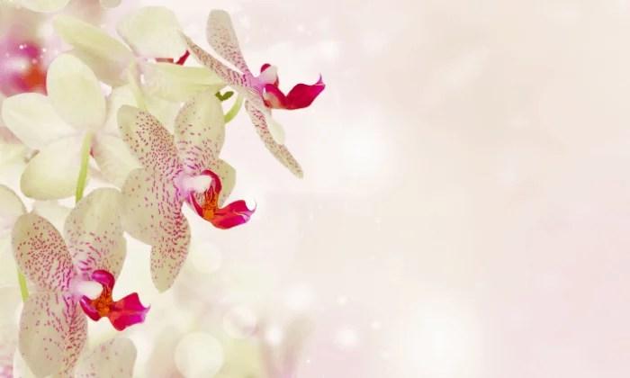 Read more about the article Entretenir mon orchidée