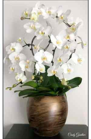 Orchidée de prestige française