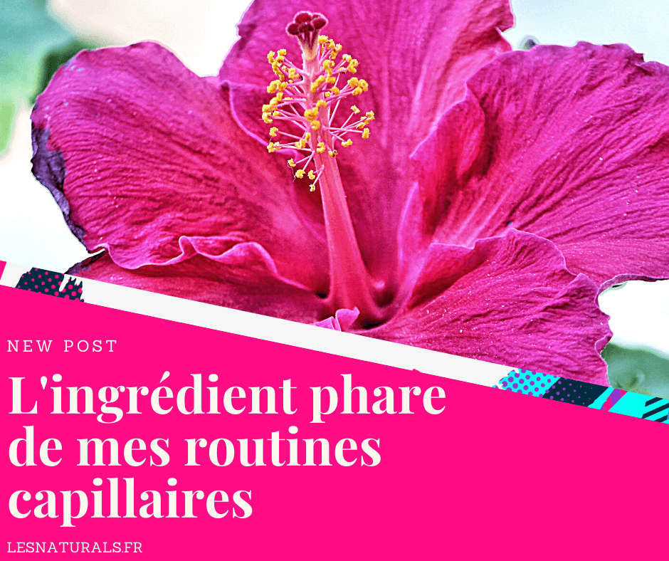 banniere-article-decouverte-hibiscus-cheveux-afros.png