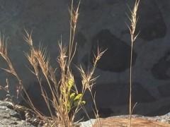 IMG_2727-le-souffle-de-l-arbre-patricia-repellin