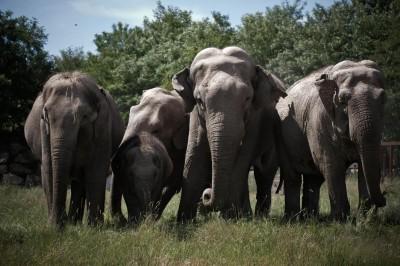 pal elephants