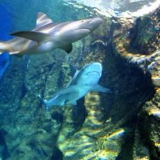 requin aquarium antibes