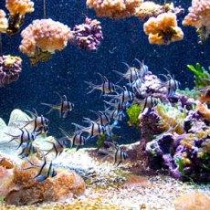 aquarium antibes