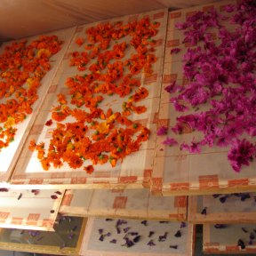 Séchage des fleurs
