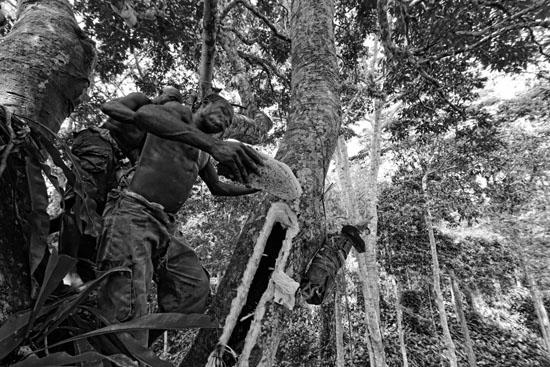The pygmy canopy honey