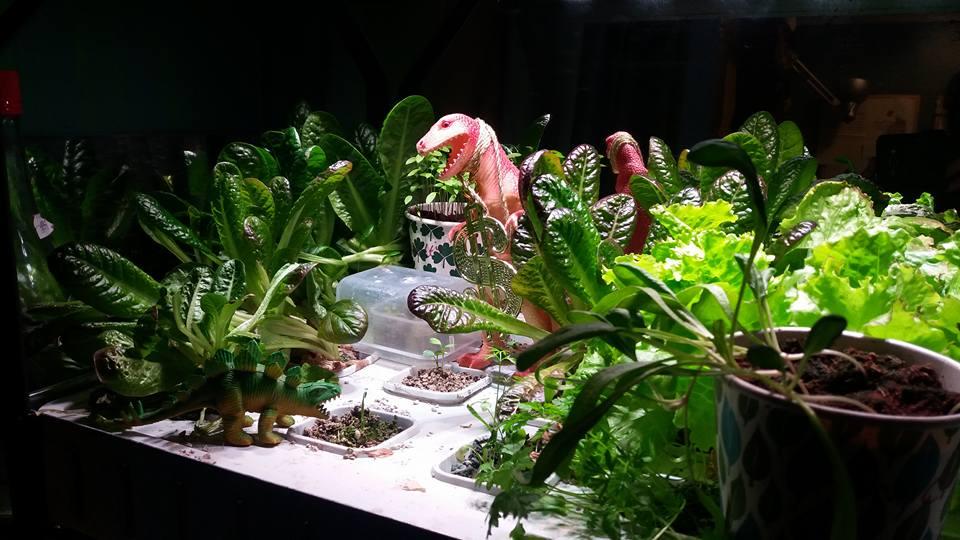 hydroponics jurassic