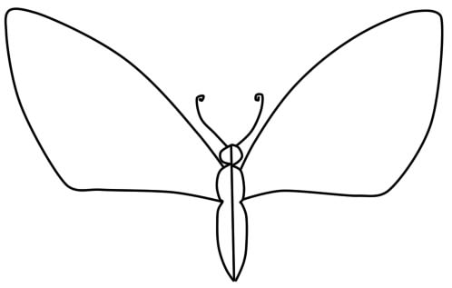 how to draw a butterfly phased pencil step 3