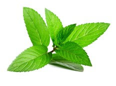 Image result for peppermint essential oil