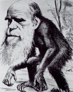 Darwin discende dalle scimmie