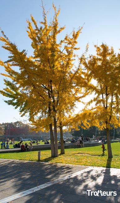 automne-les-trotteurs2