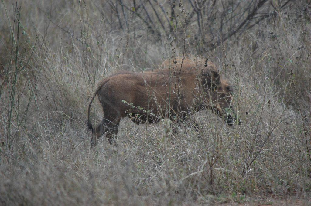 Afrique du Sud 9