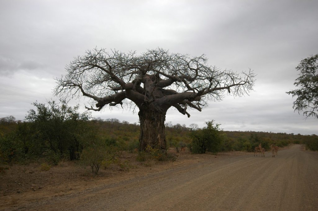 Afrique du Sud 26
