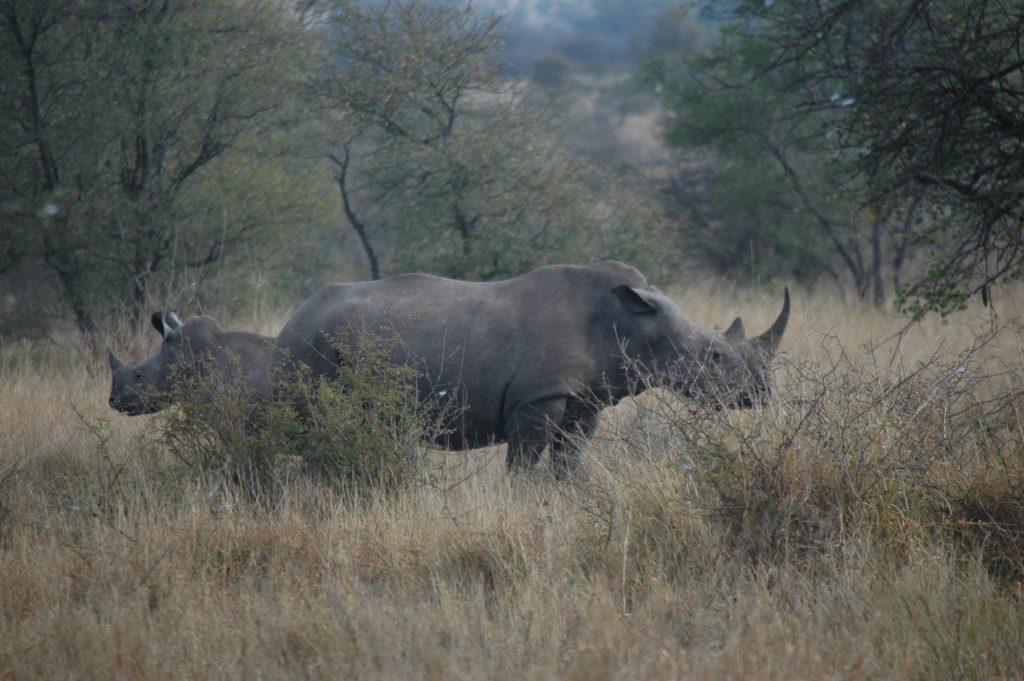Afrique du Sud 29