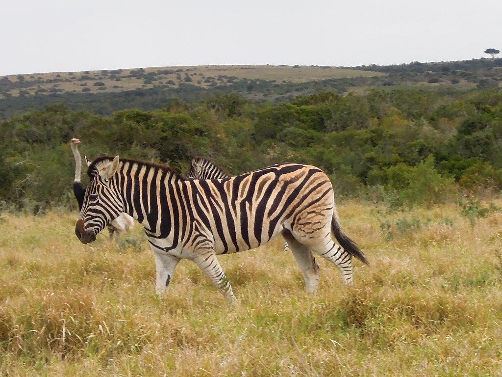 Afrique du Sud 64