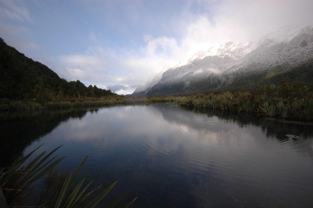 Nouvelle Zélande 50