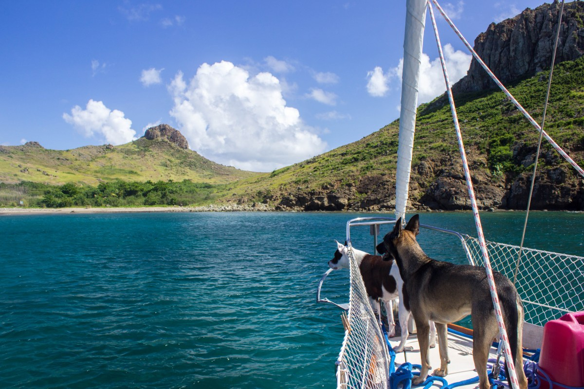Sailing with Dogs: Our Experience in the Leeward Islands