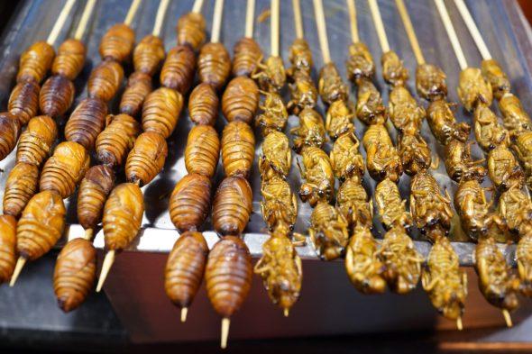 mangiare insetti cucinati. Ecco dove