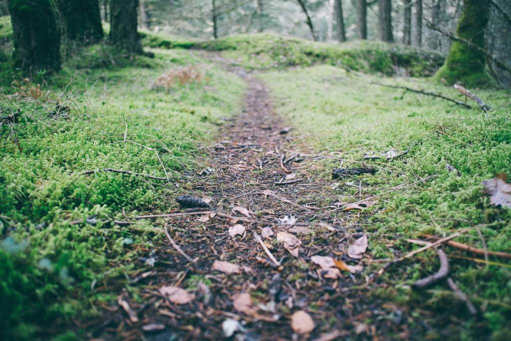 Dirt path in the woods surrounded by green grass