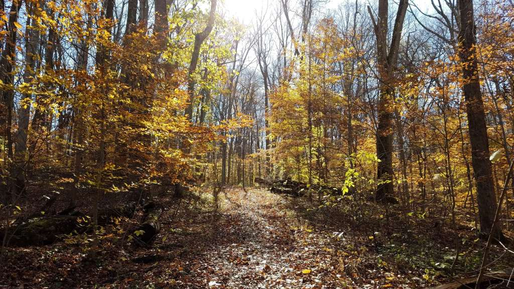 Fall trees at Shades State Park | Let Me Give You Some Advice