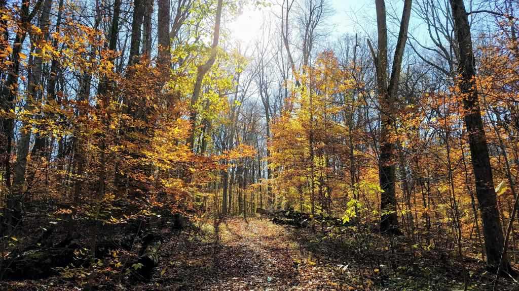 Fall activities in Indianapolis - Fort Harrison State Park