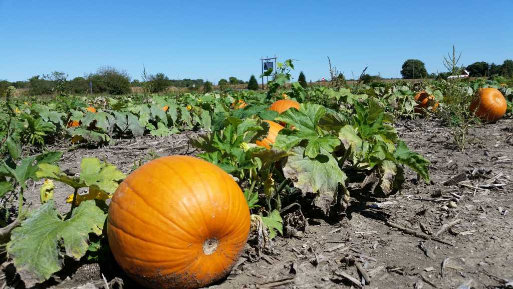 Fall activities in Indianapolis - Piney Acres Farm pumpkin patch