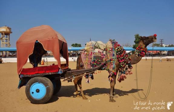 Pushkar (1)
