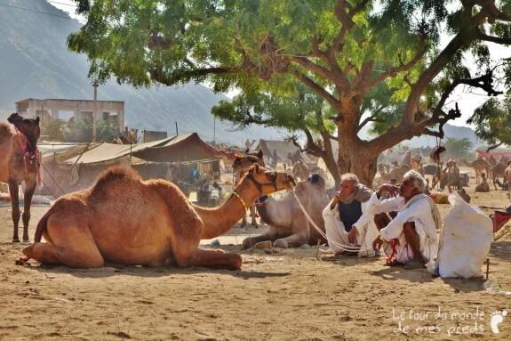 Pushkar (11)