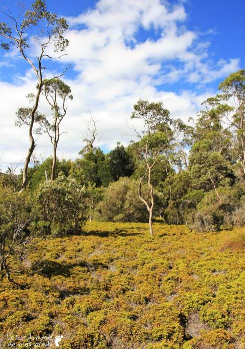 Cradle-park-tasmanie (3)