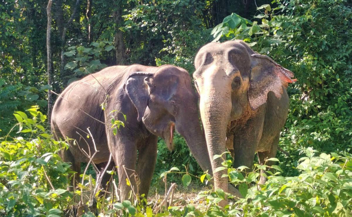 Elephants Phuket Sanctuaire