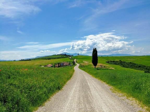 Cyprès Toscane route