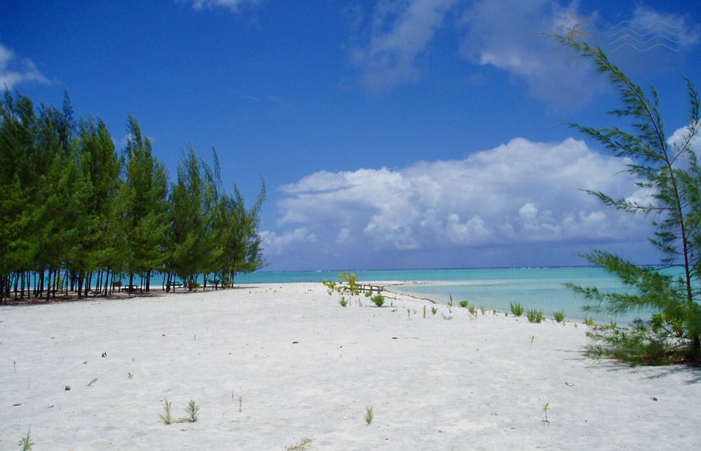 Sable blanc, pins australiens et eaux turqoises au Motu Tapu de Bora-Bora