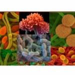 Volete proteggervi dall'influenza e dai disturbi legati al freddo? Coltivare il benessere della flora batterica intestinale vi renderà più resistenti.