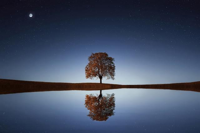 albero che si riflette nella notte