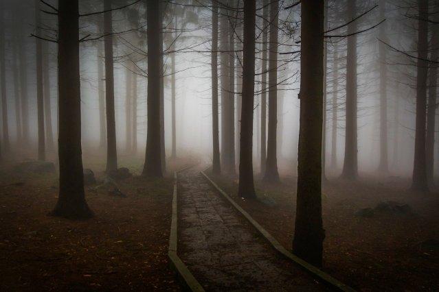 paura nel bosco