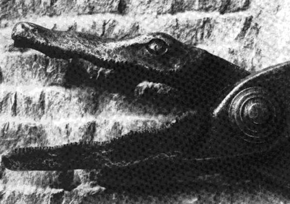 La cisaille du crocodile